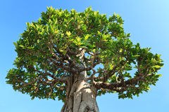 Tree in blue sky Royalty Free Stock Photography