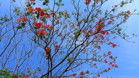 Tree on blue sky. Flower on the tree on blue sky stock footage