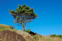 Tree and blue sky Royalty Free Stock Image