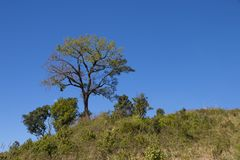 Tree with blue sky as background - landscape scene.  stock photo