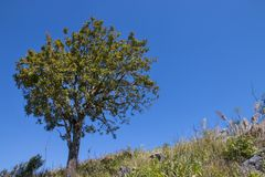 Tree with blue sky as background - landscape scene.  stock images