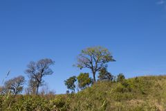 Tree with blue sky as background - landscape scene.  royalty free stock photography