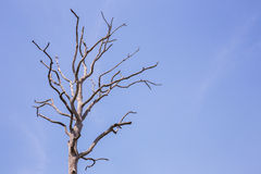 Tree on blue sky Royalty Free Stock Photography