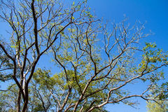 The tree on blue sky background Stock Photography