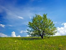 Tree on blue sky background. Royalty Free Stock Image