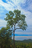 Tree and blue sky background. Beautiful green tree and blue sky background Royalty Free Stock Photo