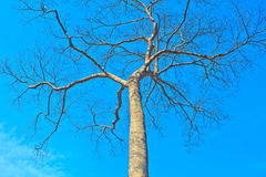 Tree and blue sky background Royalty Free Stock Image