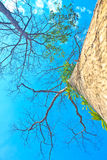 Tree and blue sky background Royalty Free Stock Photos