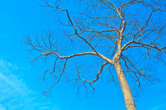 Tree and blue sky background. Beautiful green tree and blue sky background Stock Photo