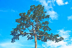Tree and blue sky background. Beautiful green tree and blue sky background Stock Photos