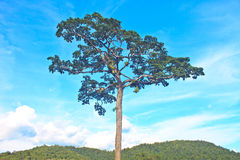 Tree and blue sky background. Beautiful green tree and blue sky background Stock Image