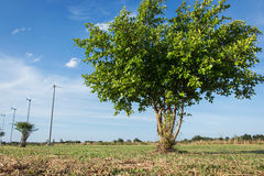 Tree on blue sky background. Green tree on blue sky background Royalty Free Stock Images