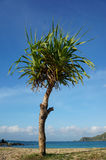Tree in blue sky background. Tree in blue sky and sea background Stock Photo