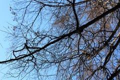 Tree on blue sky background. Stock Photos
