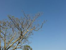 Tree in blue sky Royalty Free Stock Image