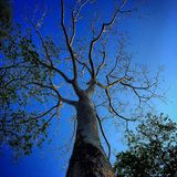 Tree blue sky Stock Images