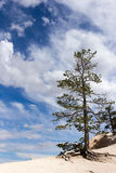 Tree blue sky Bryce Canyon. Tree with blue sky in Bryce Canyon Stock Photography