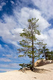 Tree blue sky Bryce Canyon. Tree with blue sky in Bryce Canyon Royalty Free Stock Photos