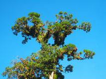 Tree and blue sky Royalty Free Stock Images