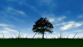 Tree and blue sky. Field,tree and blue sky stock footage