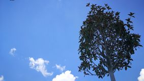 Tree in the blue sky royalty free stock photo