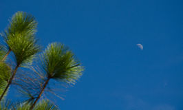 Tree in blue sky with moon Stock Photography