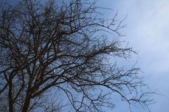 Tree with blue sky in nature. Tree blue sky nature branches royalty free stock photos