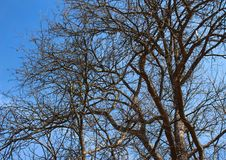 Tree with blue sky in nature. Tree blue sky nature branches stock photos