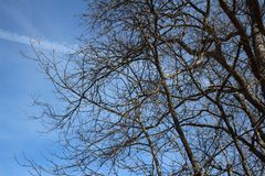 Tree with blue sky in nature. Tree blue sky nature branches royalty free stock photography