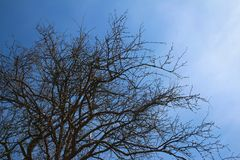 Tree with blue sky in nature. Tree blue sky nature branches royalty free stock images