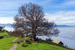 Tree and blue sky near mount Rigi, Switzerland Stock Photos