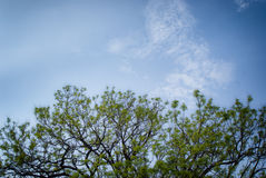 Tree and a blue sky Royalty Free Stock Image