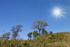 Tree with blue sky and sun as background - landscape scene.  royalty free stock images