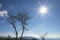 Tree with blue sky and sun as background - landscape scene.  royalty free stock image