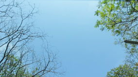 Tree and blue sky, sunroof view stock video footage