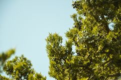 Tree and blue sky. Tree blue sky nature leaves green season royalty free stock image