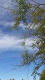 Tree and blue sky Royalty Free Stock Photos