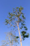 Tree on blue sky. Vertical of tree on blue sky Stock Photos