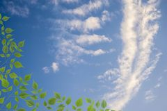 Tree, Blue sky with white clouds. Tree and Blue sky with white clouds Stock Images