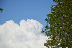 Tree and blue sky. Tree blue sky white day royalty free stock photos