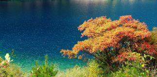 Tree and blue water Stock Image