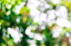 Tree blur Stock Photography