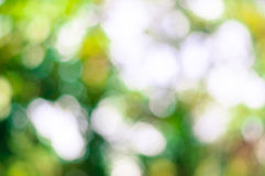 Tree blur Royalty Free Stock Photo
