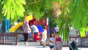 The Tree and Blurry Playground stock footage