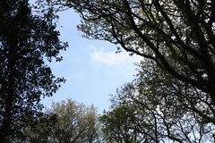 Tree boarded sky. The spring sky can be seen through silhouetted trees Stock Images