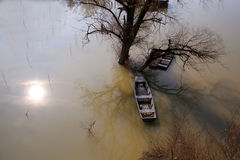 Tree and boats in floodwater - Bodrog river Hungar. Tree and boats in floodwater, Hungary Stock Photo