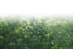 Tree bokeh background, blurred background tree green leaf bushes image large bushes stock photo