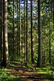 Tree Boles. In A Forest royalty free stock photos