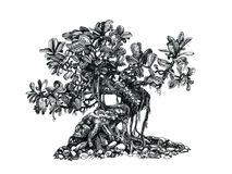 Tree bonsai,black and white,   drawing pen. A tree in the style of a bonsai. , black and white .Vegetation painted with a pen Stock Photo