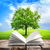 Tree and book Royalty Free Stock Photos
